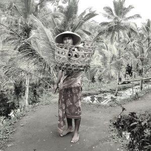 Tegallalang rizières