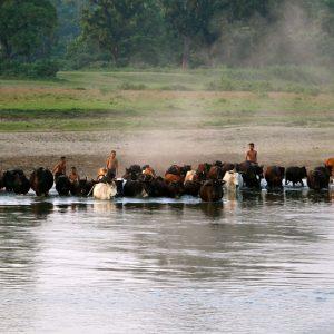 Chitwan parc